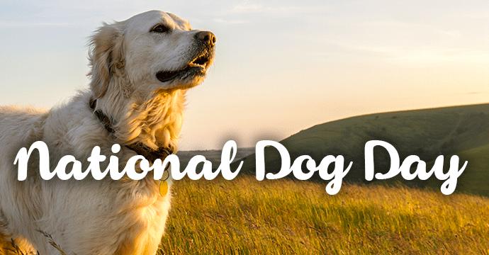 Aug 26 - National Dog day Digital Graphic for Digital Signage Communications