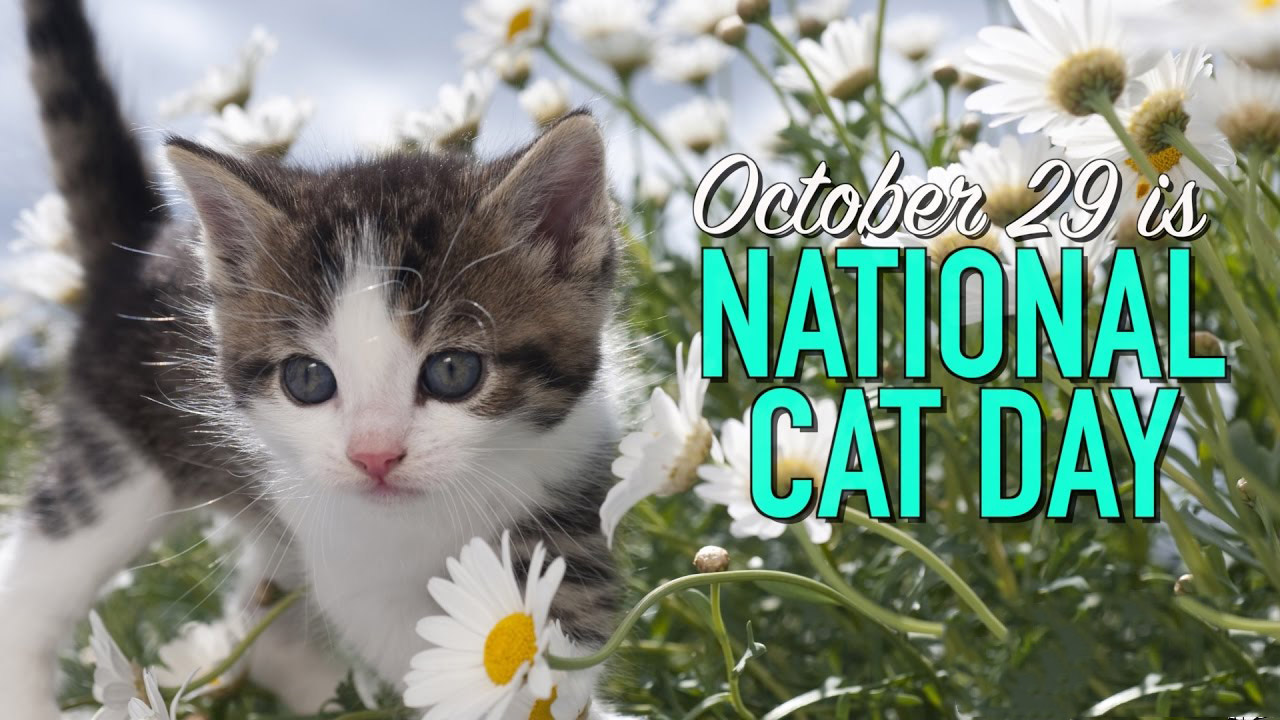 National Cat Day Oct 29 Graphic Message for Digital Signage Communications