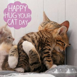 June 4 National Hug Your Cat Day Digital Signage Graphic