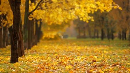 Fall Weather 2 September 2021 Digital Signage Digital Signage Content