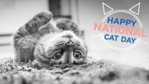 National Cat Day October 29 Digital Signage Graphic